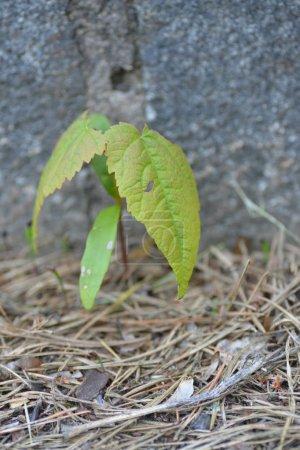 Foto de Brote de árbol en una calle - Imagen libre de derechos