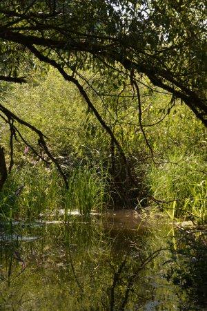 Photo pour Vue panoramique sur la forêt majestueuse paysage naturel - image libre de droit