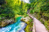 Vintgar gorge, Slovenia. River near the Bled lake with wooden tourist paths, bridges above river and waterfalls. Hiking in the Triglav national park. Fresh nature, blue water in the forest. Wild trees.