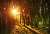 Summer forest sunset evening scenic natural background