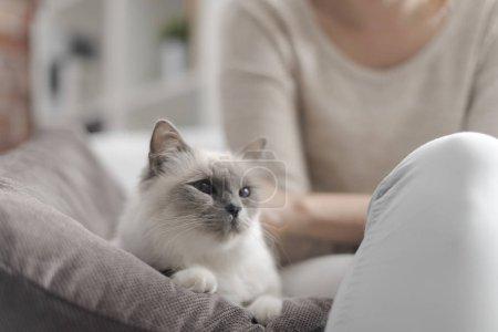 Photo pour Jeune femme heureuse assise sur le fauteuil dans le salon et caressant son beau chat - image libre de droit