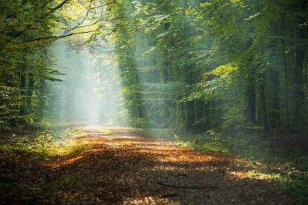 Photo pour Rayons de soleil beau matin dans la Forêt brumeuse - image libre de droit
