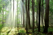 Beautiful morning sunrays in forest