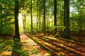 beautiful morning with sunshine in autumn forest
