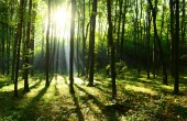 beautiful autumn forest landscape with morning sunbeams