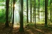 Beautiful sunbeams in autumn deciduous forest