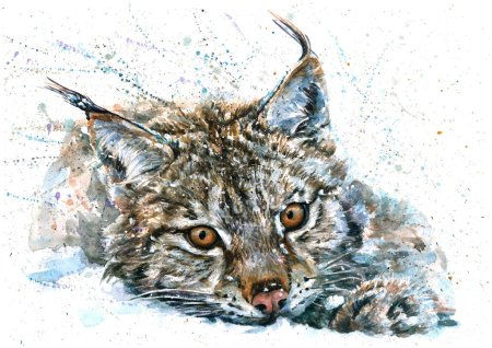 Photo pour Lynx aquarelle la faune animaux prédateurs - image libre de droit