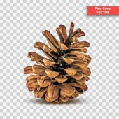 Single detailed pine cone isolated on transparent background Object Decor for New Year and Christmas Realistic Vector Illustration