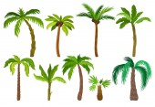 Flat vector set of palm trees. Plants of tropical forest. Landscape elements for mobile game. Nature theme