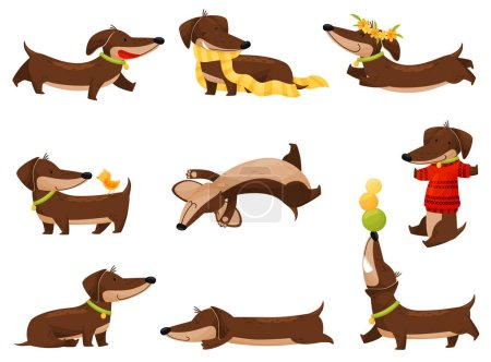 Illustration pour Cartoon teckel sur fond blanc. Style de vie de chien. Chien de race dressé. Illustration vectorielle plate . - image libre de droit