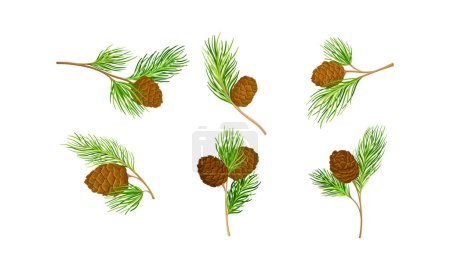 Illustration for Cedar Branch with Evergreen Needle-like Leaves and Barrel-shaped Brown Seed Cones Vector Set. Cedrus Coniferous Plant as Ornamental Tree Concept - Royalty Free Image