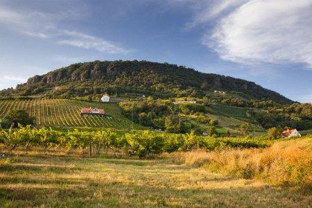 Foto de Viñedos en las tierras altas de Balaton, Badacsony mountain, Hungría - Imagen libre de derechos