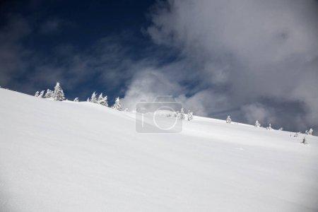 Foto de Fondo de invierno de abetos cubiertos de nieve en las montañas - Imagen libre de derechos