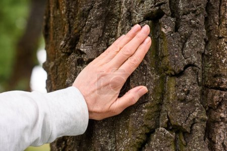 cropped view of elderly woman touching tree bark
