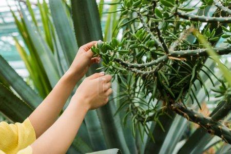 recadrée coup de jeune femme toucher succulentes à effet de serre