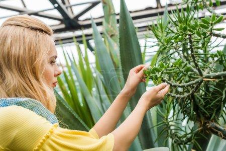 vue de côté de blonde femme travaillant avec plantes succulentes à effet de serre