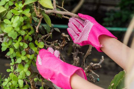 cropped shot of woman in pink rubber gloves working with green plants
