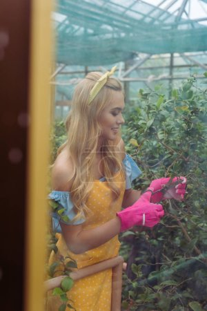 view through the window of smiling woman in rubber gloves and apron cutting plants with scissors in greenhouse