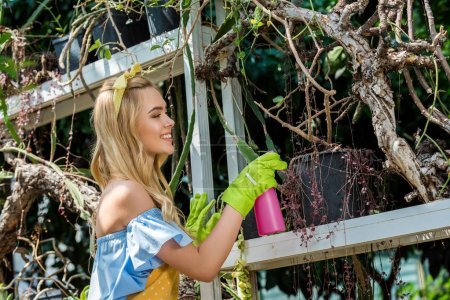 side view of beautiful smiling girl in rubber gloves holding sprayer and watering plants in greenhouse