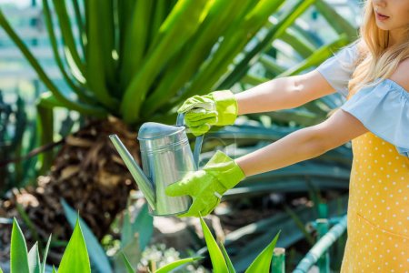 cropped shot of young woman in rubber gloves watering plants in greenhouse