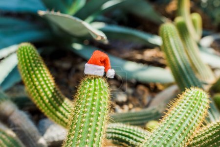 close-up view of green cactus with small santa hat in greenhouse