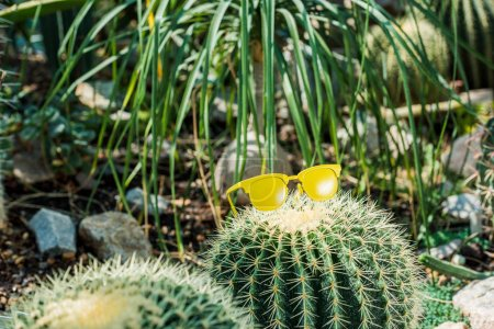Photo for Beautiful green cactus with bright yellow sunglasses in greenhouse - Royalty Free Image