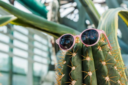 close-up view of beautiful green cactus with stylish sunglasses in greenhouse