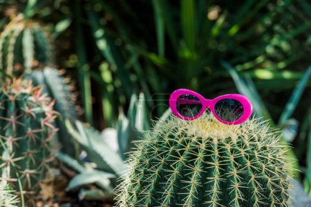 Photo for Beautiful green cactus with pink sunglasses in greenhouse - Royalty Free Image
