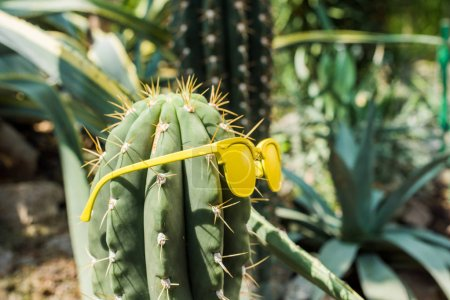 Photo for Close-up view of beautiful green cactus with yellow sunglasses - Royalty Free Image