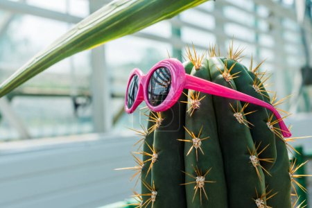 beautiful green cactus with bright pink sunglasses in greenhouse