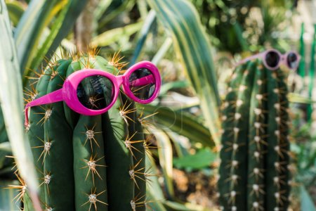 close-up view of beautiful green cactus with bright pink sunglasses
