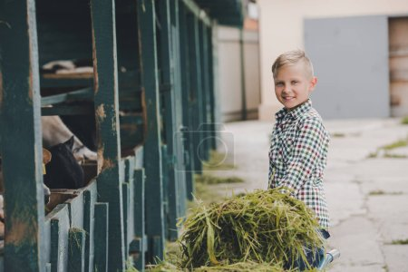 Photo for Happy boy smiling at camera while feeding cows with grass - Royalty Free Image