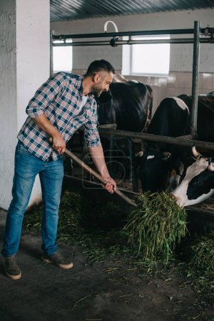 smiling middle aged farmer feeding cows with grass