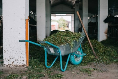 wheelbarrow with grass and pitchforks in stall at farm