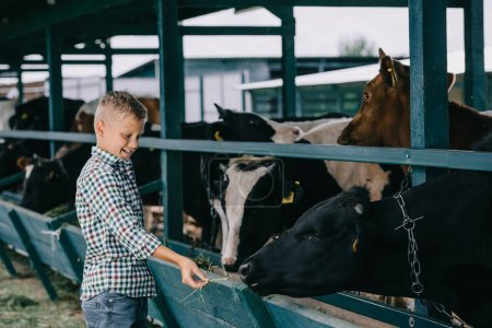 happy child in checkered shirt feeding cows in stall