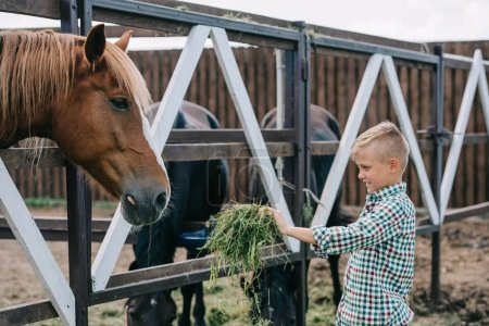 smiling boy holding grass and feeding horse in stall