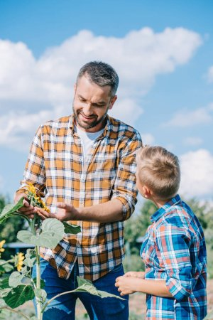 boy looking at smiling father touching sunflower in field