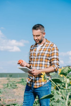 handsome farmer holding ripe tomato and using digital tablet while standing in field