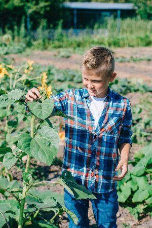 Photo for Happy child looking at sunflower while walking on field - Royalty Free Image