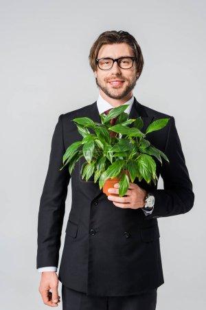 Photo pour Sourire d'homme d'affaires en costume et lunettes de vue avec une plante verte en pot de fleurs isolé sur fond gris - image libre de droit