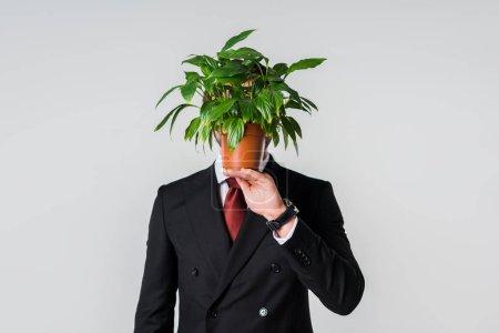 Photo pour Obscurci vue d'homme d'affaires en costume avec une plante verte en pot de fleurs isolé sur fond gris - image libre de droit