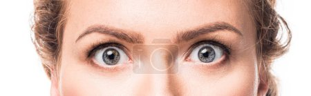 shocked grey female eyes looking at camera, isolated on white
