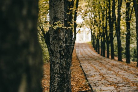 Photo for Empty autumn park with trees beside path - Royalty Free Image