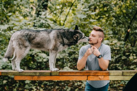 man with husky on dog walk obstacle in park