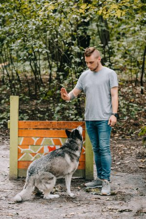 young man training husky dog on jumping obstacle in park