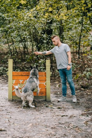 cynologist training siberian husky dog to jump over obstacle