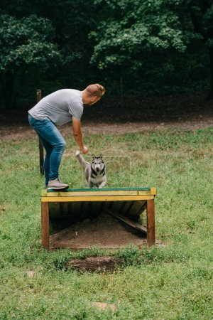 cynologist training with obedient husky on dog walk obstacle