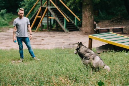 cynologist training with siberian husky dog