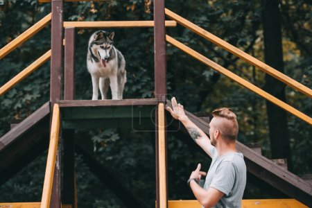 dog trainer with siberian husky dog on stairs obstacle
