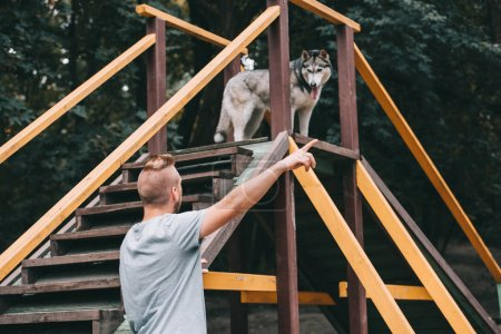cynologist pointing to siberian husky dog on stairs obstacle